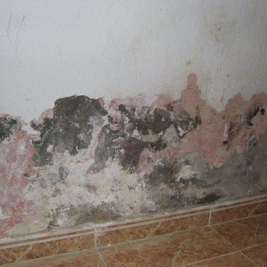 humedad paredes watertec